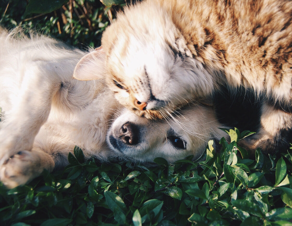 pet care in South Shore of Massachusetts